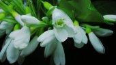 Экологи призывают провести 8 марта без весенних цветов