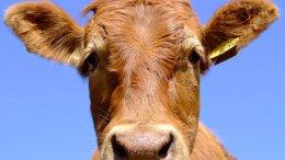В рамках проекта компании «Данон» в Украине создано за год 20 молочных кооперативов | Компании | Дело