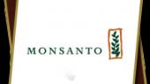 «Монсанто» планирует открыть в Украине селекционную станцию по кукурузе