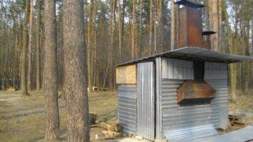 Суд пошел против Януковича – разрешил рубить лес под Киевом | Политика | Дело