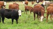 В 2012 году поголовье коров в Украине продолжает сокращаться