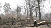 За ночь в Киеве срубили около сотни деревьев
