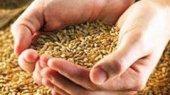 Глава Аграрного фонда: Скандалы работе не помеха