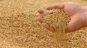 Украина и Россия будут действовать на зерновом рынке сообща