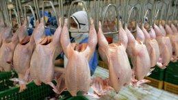 Госветфитослужба начала аудит предприятий, которые хотят поставлять курятину в ЕС | Потребрынки | Дело