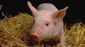 В Украину запретили ввоз мяса из Беларуси