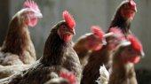 ЕБРР одобрил увеличение финансирования агрохолдинга МХП