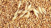 Аграрные холдинги завершают посевную кампанию