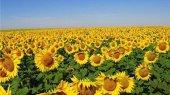 С завтрашнего дня Украине запрещено экспортировать в Россию сою и подсолнечник