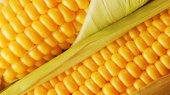 Трейдеры заполнили экспортные квоты на поставку украинской кукурузы в ЕС