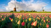 Google построит за $600 млн новый дата-центр в Нидерландах