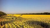 Аграрии Донбасса потеряют порядка 5 млрд грн из-за действий боевиков
