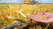 Минагропрод повысил минимальные цены на пшеницу и ячмень