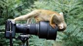 Шифровать фотографии теперь можно в фотокамере