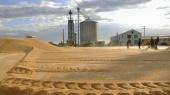 Рада оставила аграриям налоговые льготы и отменила возмещение НДС при экспорте зерна (обновлено)