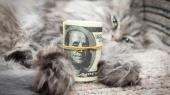 НБУ ужесточил ответственность инвесторов за докапитализацию банков и создал Комитет по монетарной политике