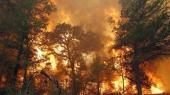 Пожары из российского Забайкалья распространились на Китай