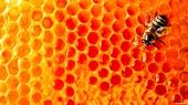 В России решили уничтожить контрабандный азиатский мед