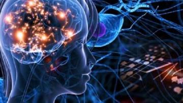 Ученые из США разработали методику глубокой визуализации головного мозга | Наука | Дело
