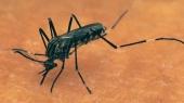 В МАГАТЭ предлагают бороться с вирусом Зика при помощи стерилизации москитов