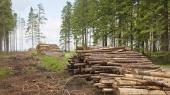 Албания на 10 лет запретила вырубать деревья