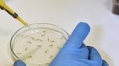ВОЗ ожидает увеличения количества больных вирусом Зика