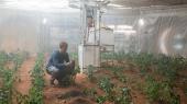 Ученые доказали, что выращивание овощей на Марсе и Луне уже не фантастика