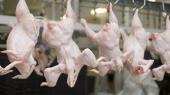 Украина увеличила экспорт мяса на четверть