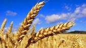 """""""Аграрный фонд"""" в 30 раз уменьшил чистую прибыль"""