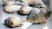 Вылов рыбы в Киевской области не запрещали — Госрыбагентство