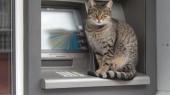 """Сеть банкоматов """"АТМоСфера"""" будет работать еще два месяца"""