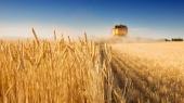 Китай заинтересован в увеличении экспорта украинской сельхозпродукции