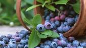 Эксперты назвали самую дорогую ягоду в новом сезоне