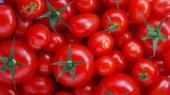 Цены на помидоры резко пошли вниз