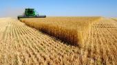 Украина стала третьей страной-экспортером пшеницы в Италию